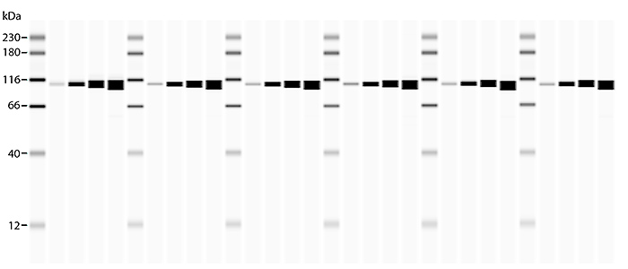 Detection of PI3 Kinase