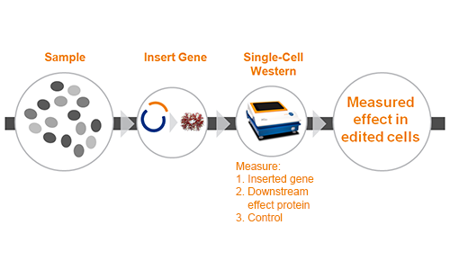 Milo chart - Measure gene editing efficiency or effect in low efficiency gene editing systems