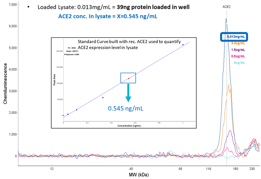 Automated ACE2 binding assay standard curve built with recombinant ACE2 and quantified by the Jess Simple Western testing equipment