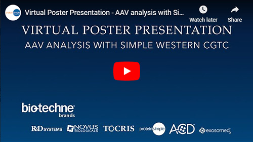 Virtual Poster Presentation on In-Capillary Immunoassay and Total Protein Detection for Adeno-Associated Virus (AAV) Proteins During Purification from Whole-Cell Lysate